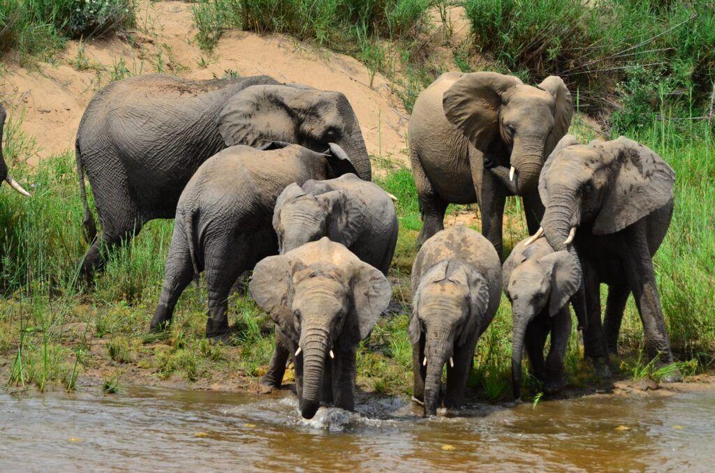 ElephantHerd scaled